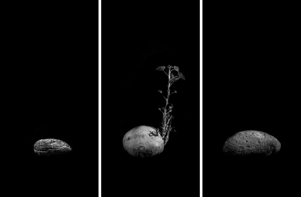"""Mémento mori V / dim.80x120cm (3 panneaux de 80x40cm) / """"Quand les roches auront des feuilles..."""""""