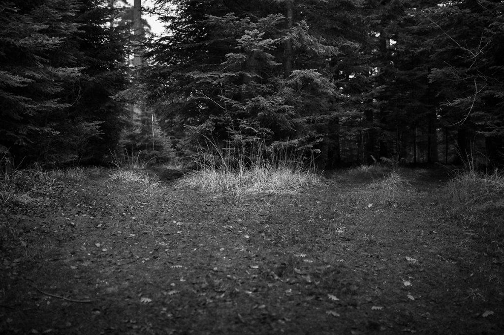 Dans les bois / Le choix