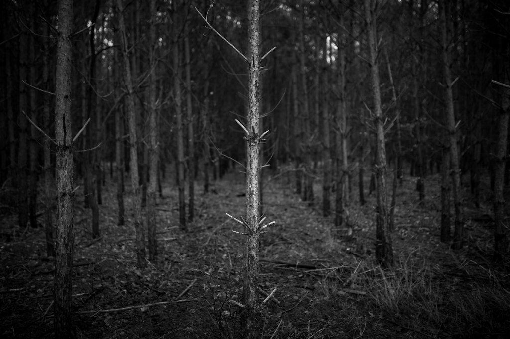 Dans les bois - Berlin 24.12.2016