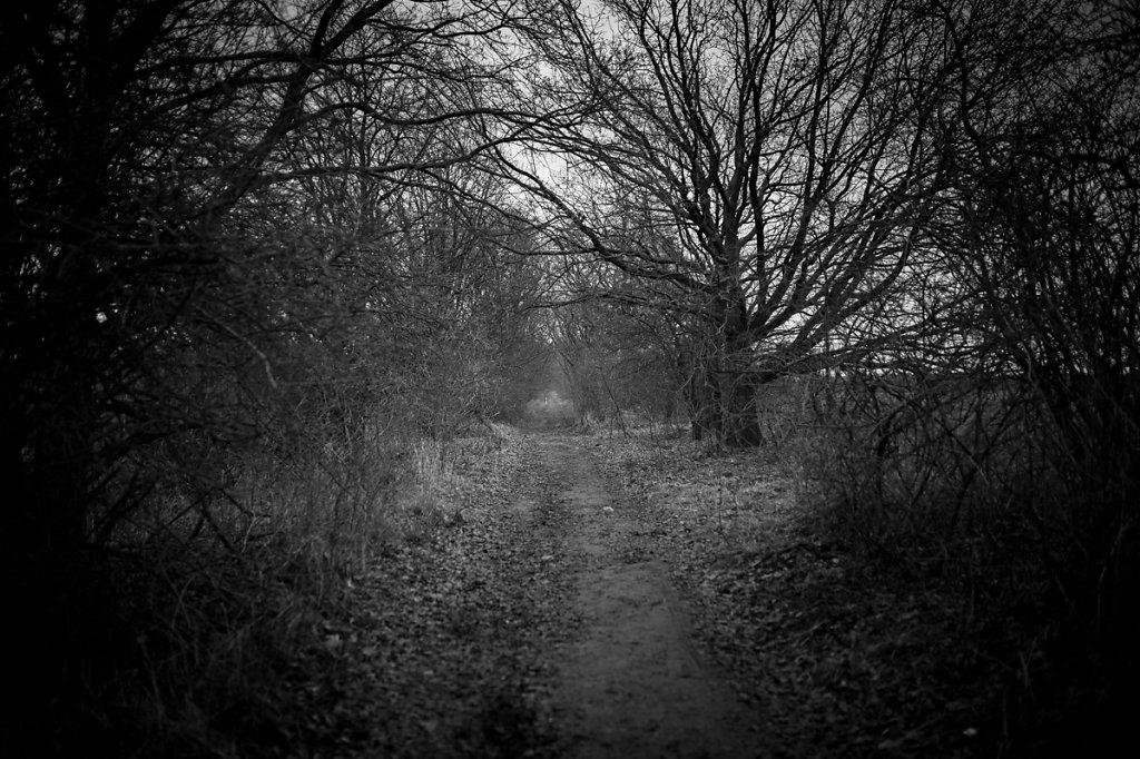 Dans les bois - Point de fuite II