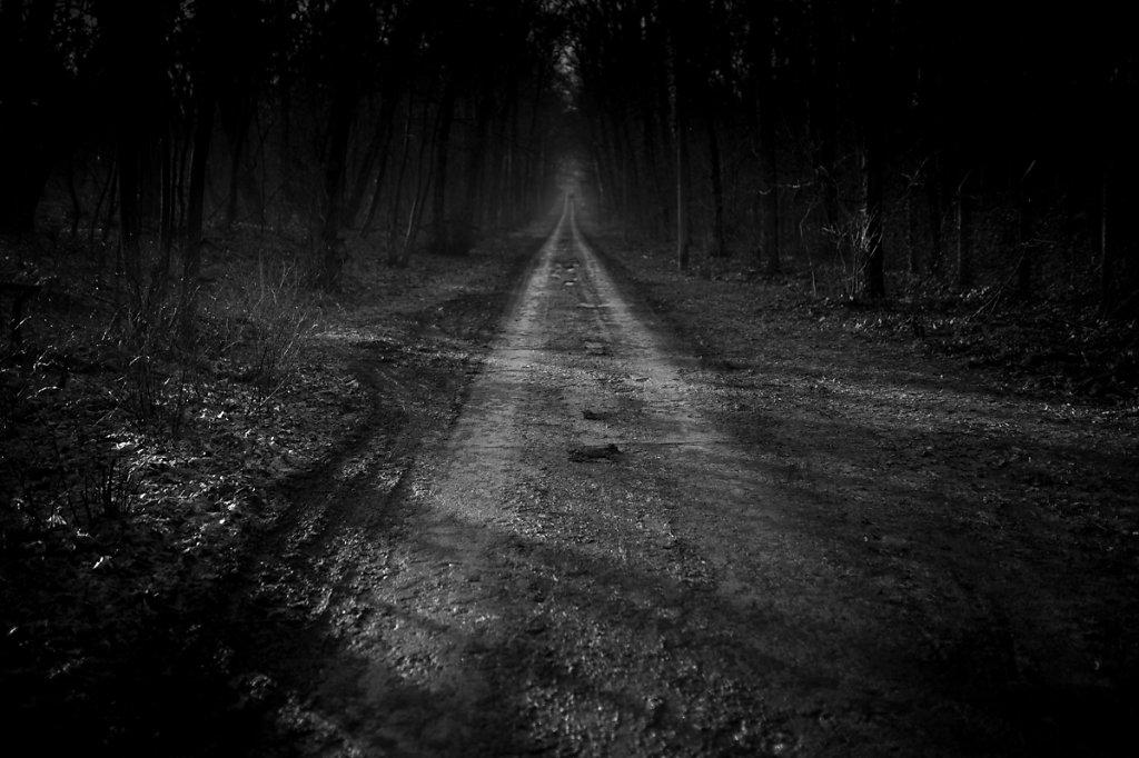 Dans les bois - Point de fuite III