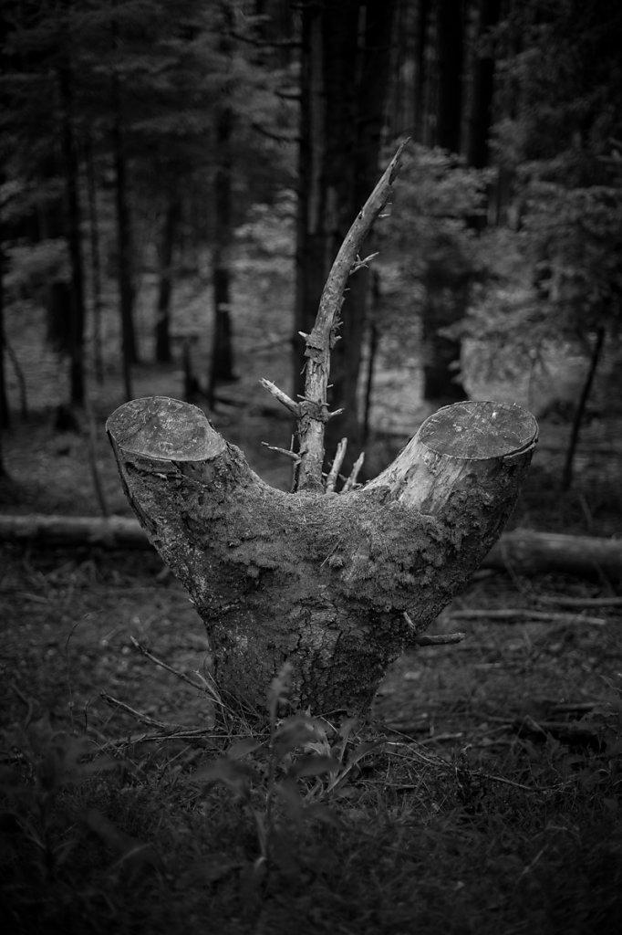 Dans les bois - La dernière défense de l'arbre