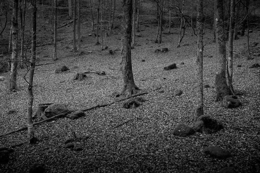 Dans les bois - 1 / Ce n'est pas triste les vieilles écorces... ( * Le petit prince /  Antoine de Saint-Exupéry )