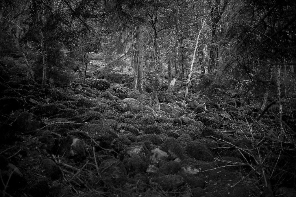 Dans les bois - 2 / Ce n'est pas triste les vieilles écorces... ( * Le petit prince /  Antoine de Saint-Exupéry )
