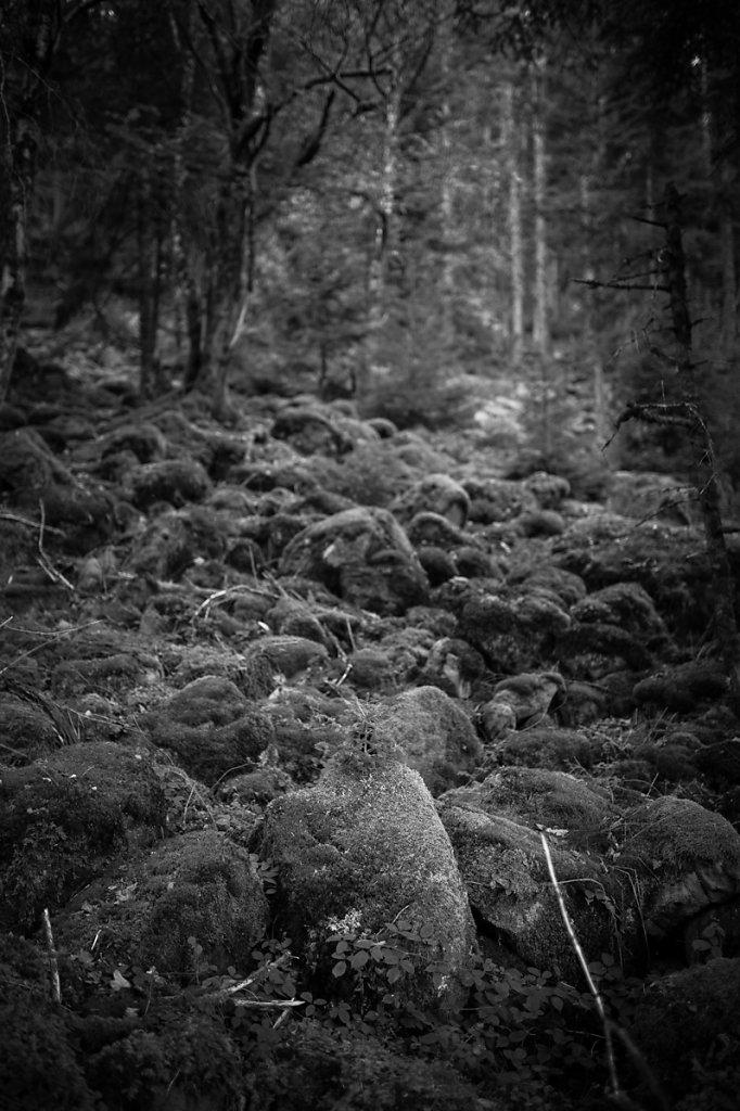 Dans les bois - 3 / Ce n'est pas triste les vieilles écorces... ( * Le petit prince /  Antoine de Saint-Exupéry )