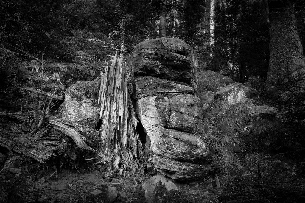 Dans les bois - 5 / Ce n'est pas triste les vieilles écorces... ( * Le petit prince /  Antoine de Saint-Exupéry )