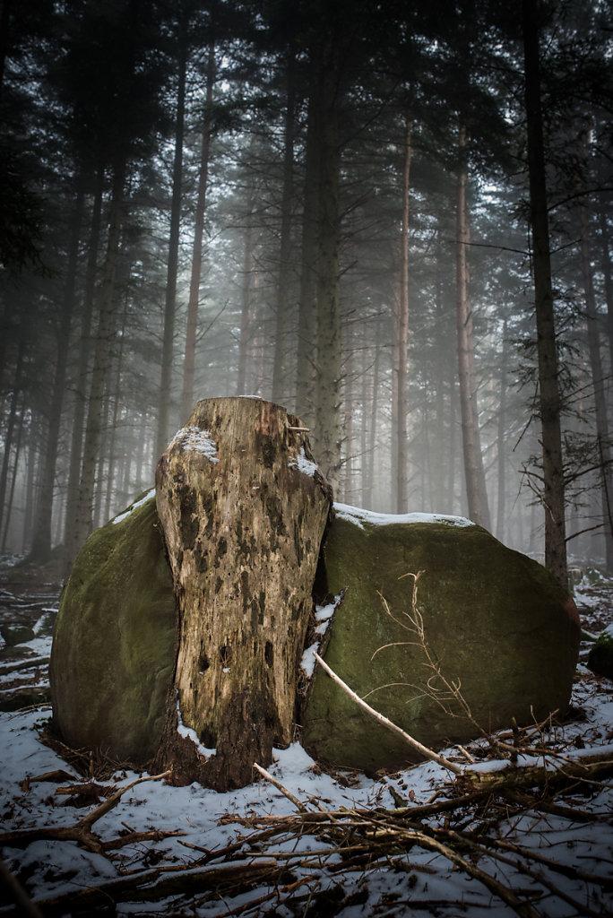 Dans les bois - Le totem