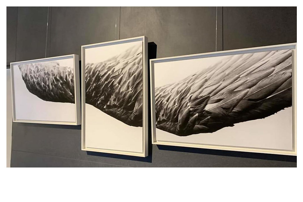 09 - Les Ailes de l'ange - Galerie Murmure 2020