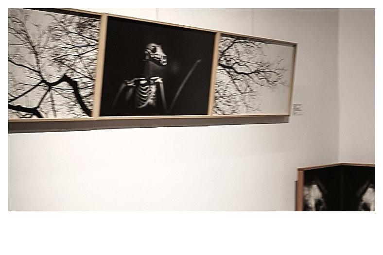 10 - L'Arbroptère - Galerie Murmure 2020